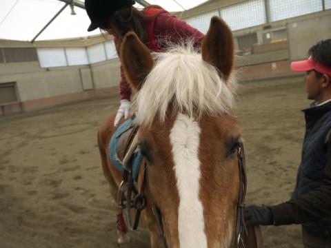 馬は背中から伝わる情報で、乗った人の感情や乗馬の腕前がわかるという。かくいう私も、緊張が伝わってしまったのか、以前乗った馬に「ふーーーーーーっ」とため息を吐かれたことも・・・案ずることなかれ、こちらが「暴れ出したらどうしよう」と不安に思っている間も、馬の方は意外と大人なのである。