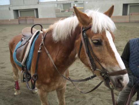 馬とご対面。まつげが長い!